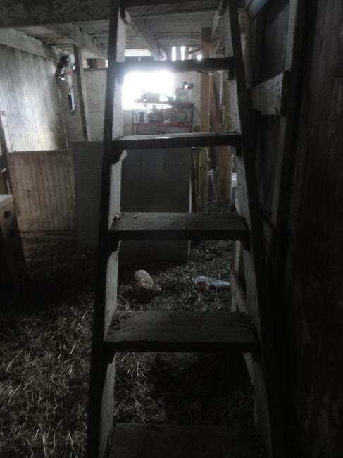 Barn stairs