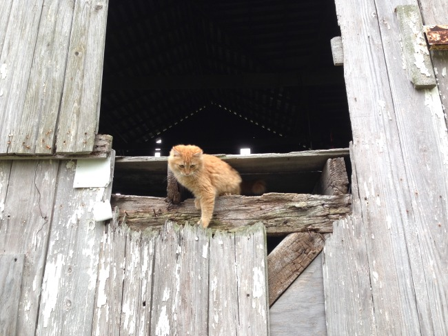 kitty on the Weiser homestead.