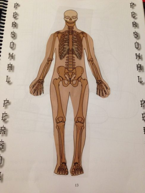 Exploring Creation With Human Anatomy And Physiology Review Weiser